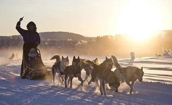 Wilderness avontuur Lapland