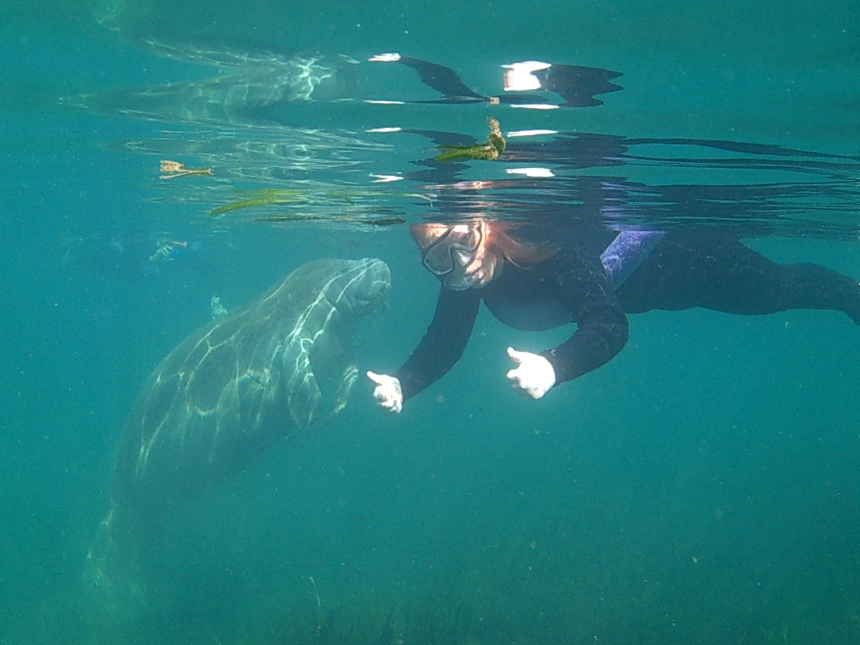 Wow! snorkelen met zeekoeien in Florida
