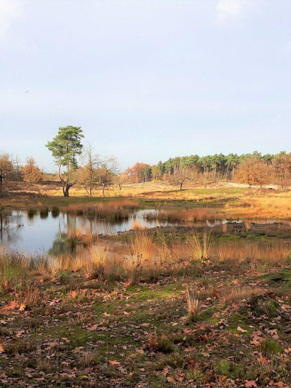 natuurgebieden van Gelderland