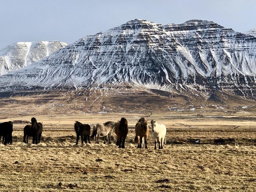 paarden ringweg ijsland