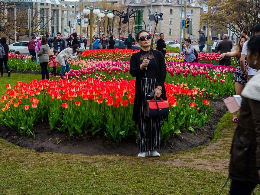 Tulpen in Ottawa - een welkom foto-onderwerp