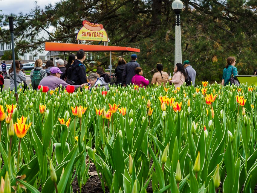 Genoeg kraampjes en foodtrucks bij de tulpen in Ottawa