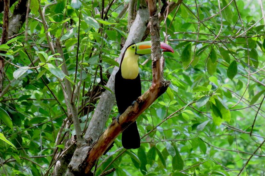 toekan Tikal National Park