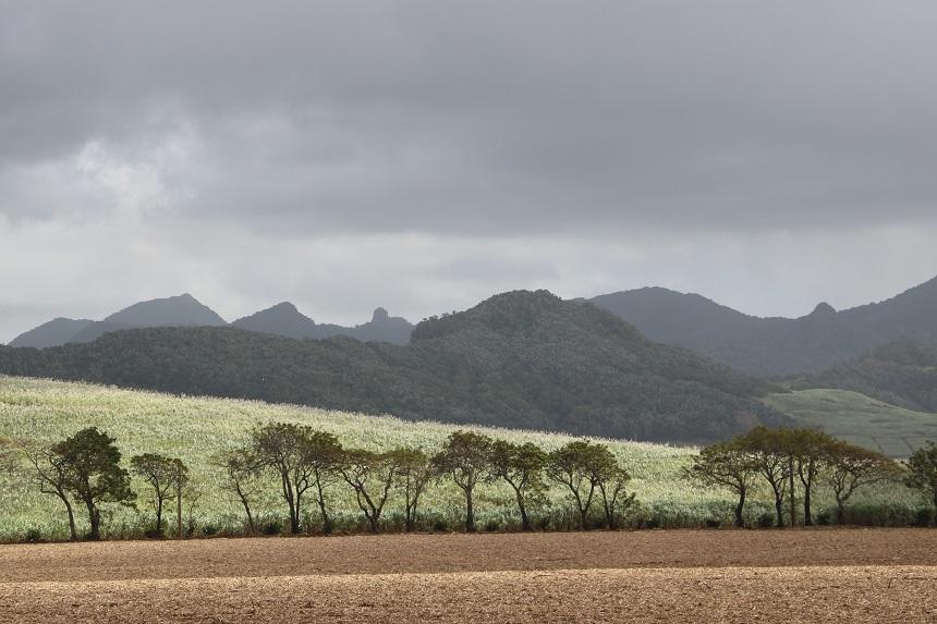 Suikerrietvelden op Mauritius