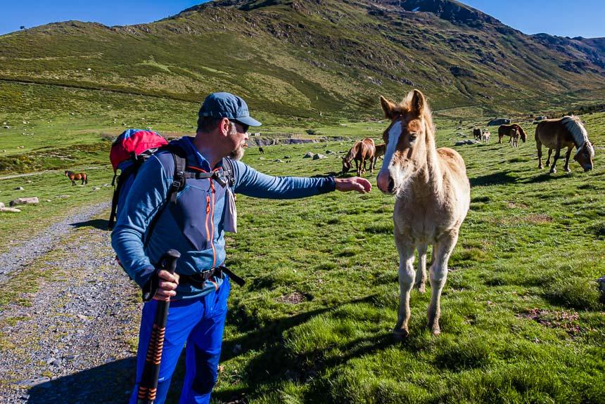 Hiken in de Pyrénées-Orientales met Suédois et cheval (Zweed en paard)