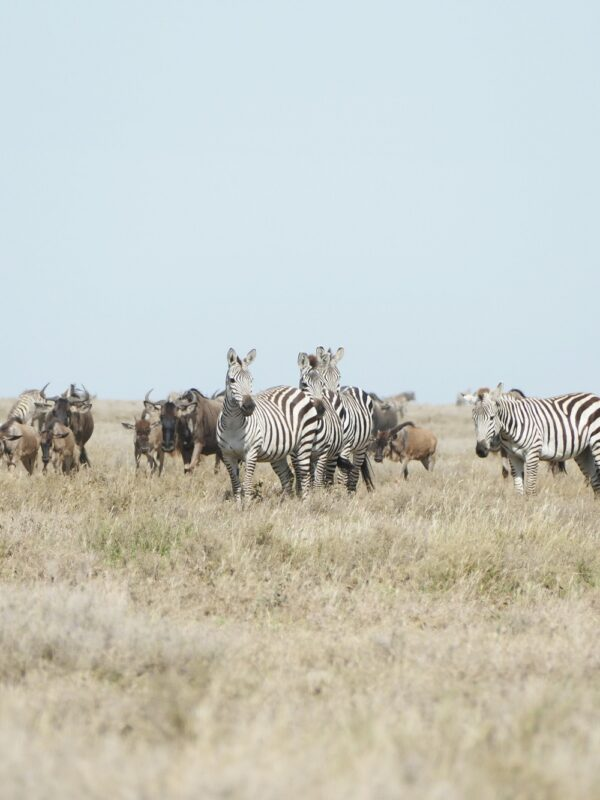 Serengeti Tanzania Great Migration