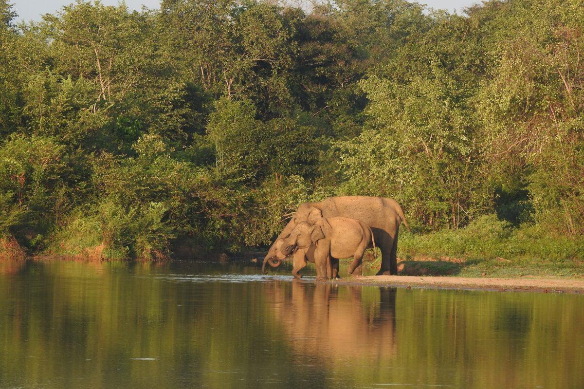 olifanten udawalawe