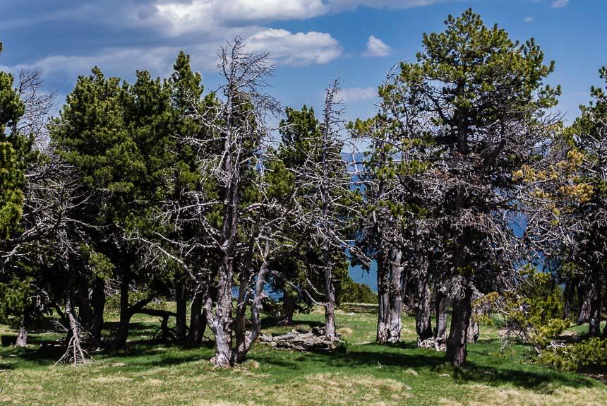 Bomen in verschillende levensfasen