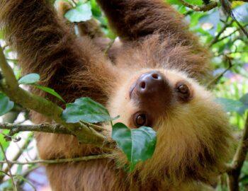 10x verliefd worden tijdens je rondreis Costa Rica