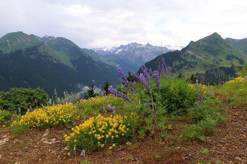 De Alpenweides staan in de zomer volop in bloei