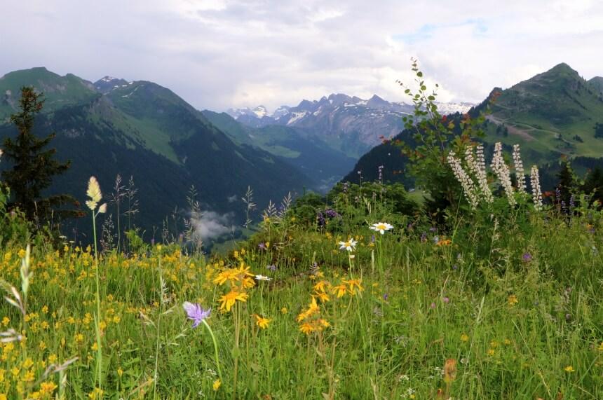 In de zomer staan de Alpenweides in bloei