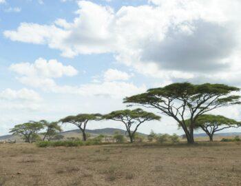 Maak je ultieme safari droom waar in Tanzania