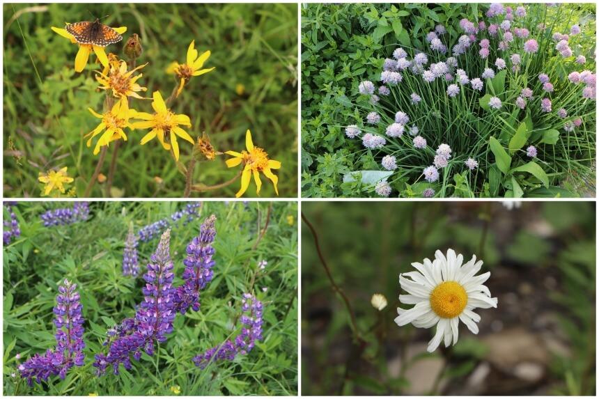 Wilde bloemen en kruiden in de Franse Alpen