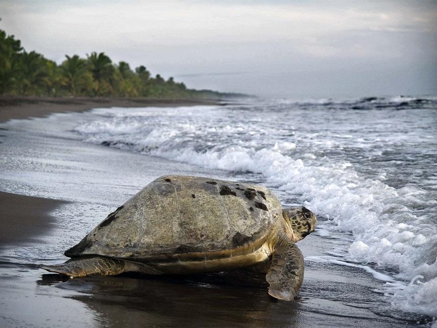 Schildpadden spotten Costa Rica