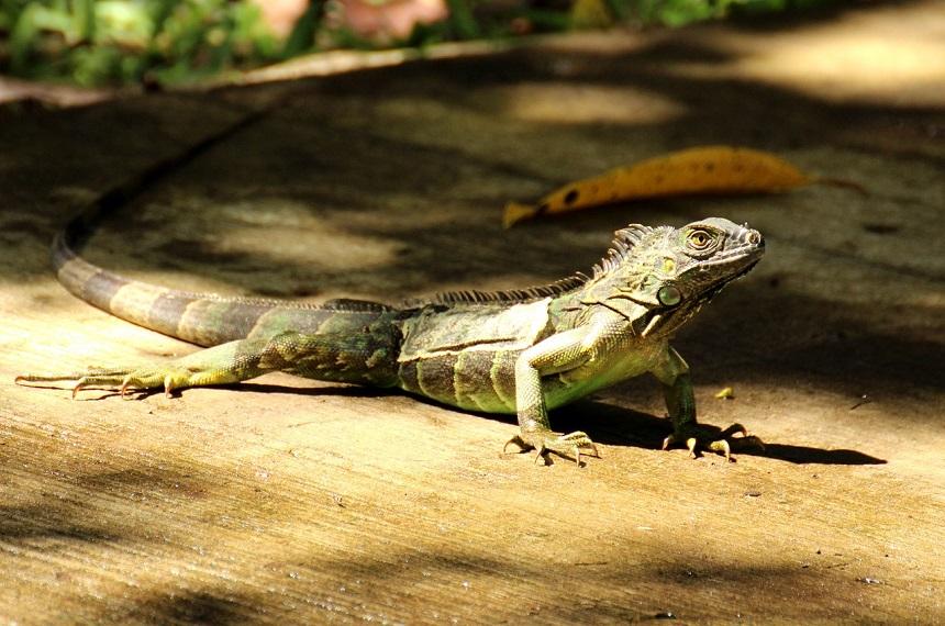 rondreis Costa Rica tips