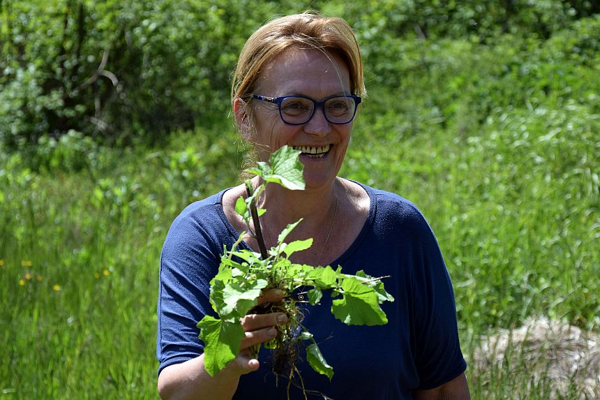 Eigenaresse van een B&B langs de Saône plukt haar eigen planten en kruiden