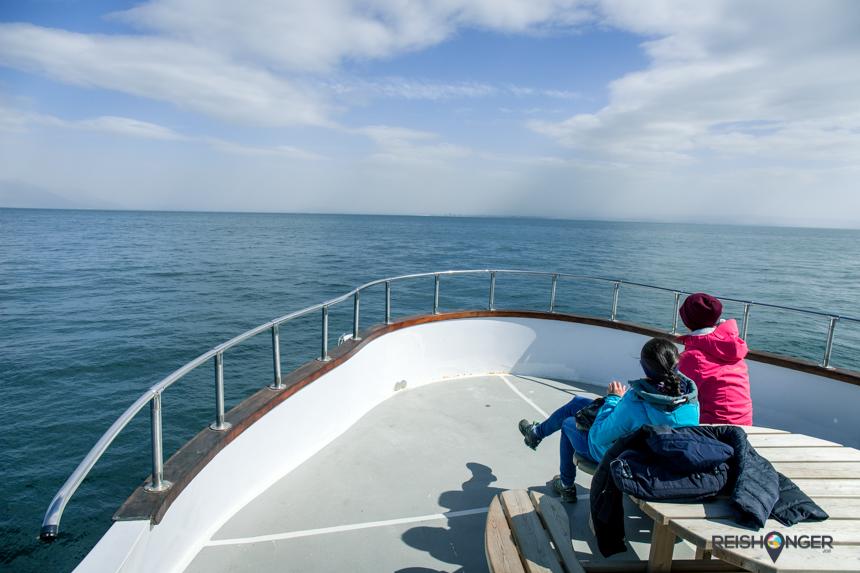 Op zoek naar orka's en walvissen