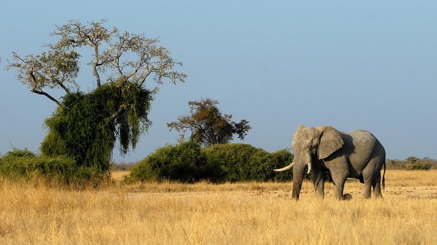 Botswana Big 5 Afrika