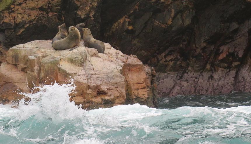 Islas Ballestas - islas bela