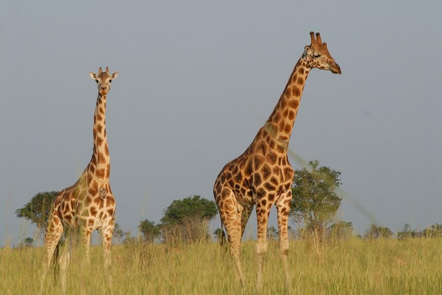 Oeganda Big 5 Afrika