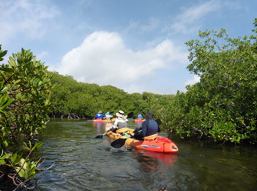 Kayakken in de mangroves van Bonaire