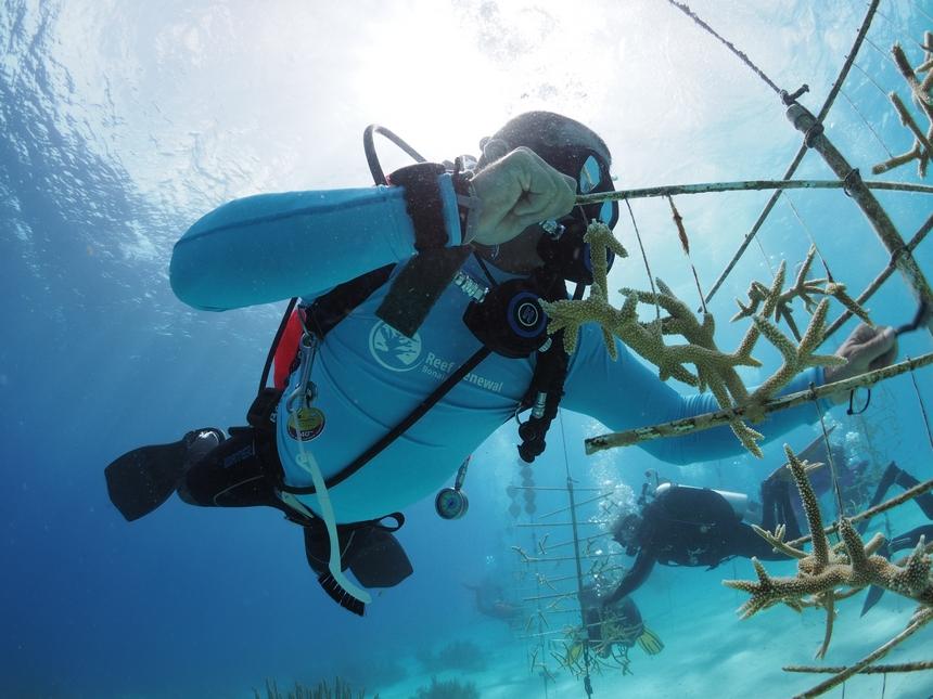 Reef Renewal Doundation Bonaire koraalkwekerij