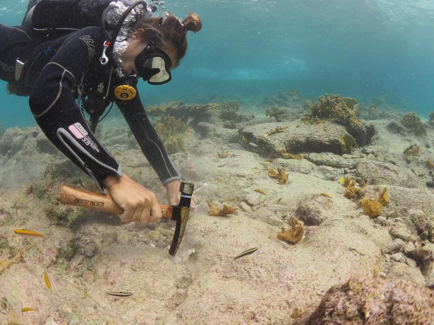 Het uitzetten van een Elkhorn-koraal kolonie op Bonaire