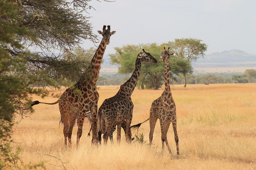 Serengeti BIG5