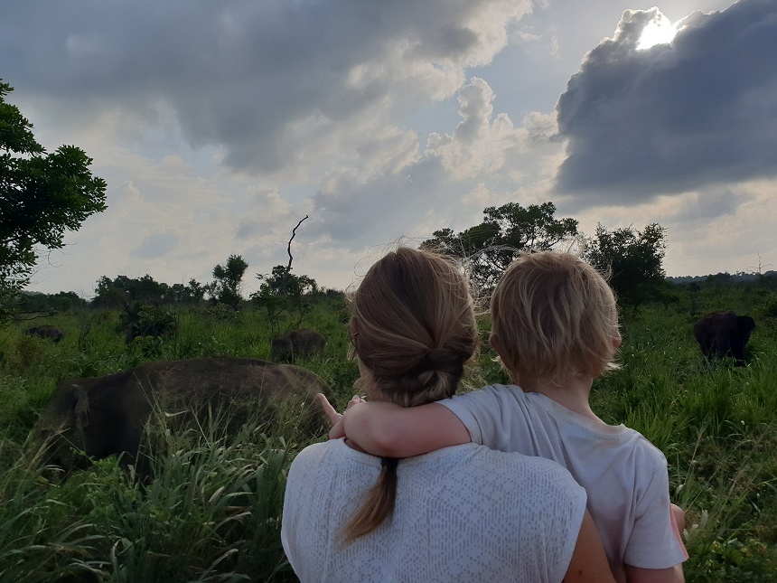 hurulu olifanten spotten