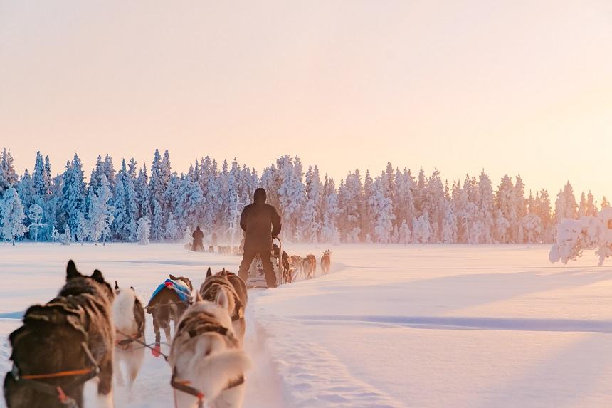 activiteiten in Fins Lapland huskysledetocht