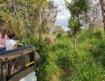 Op safari met kinderen: drie handige tips