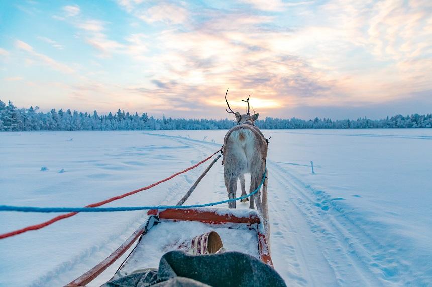 rendiersafari activiteiten in Fins Lapland