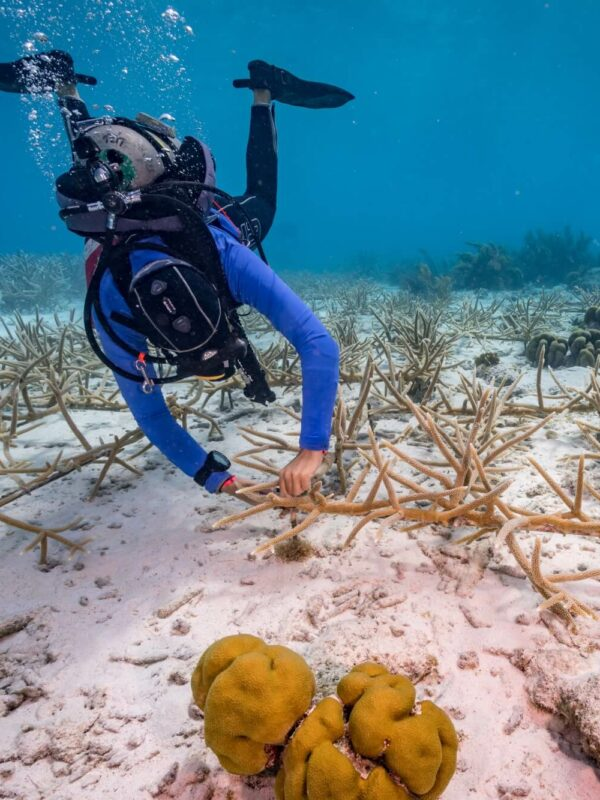 Reef Renewal Foundation Bonaire