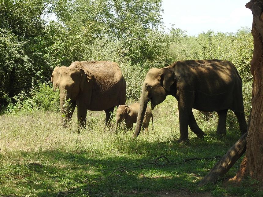 Baby olifanten Udawalawe