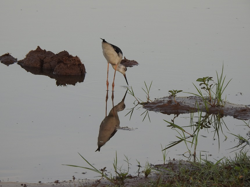 Vogels spotten tijdens je safari in Sri Lanka