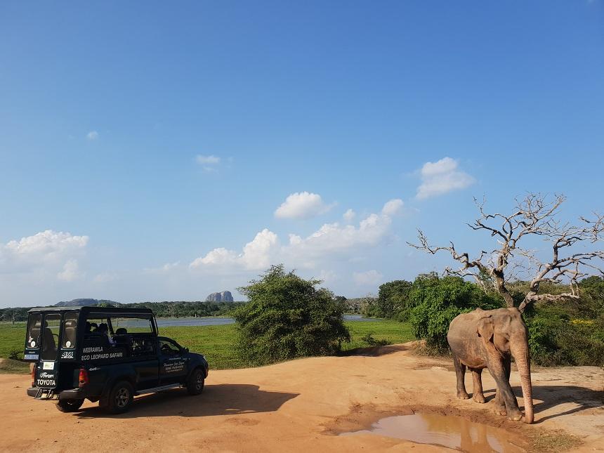 yala jeepsafari olifant
