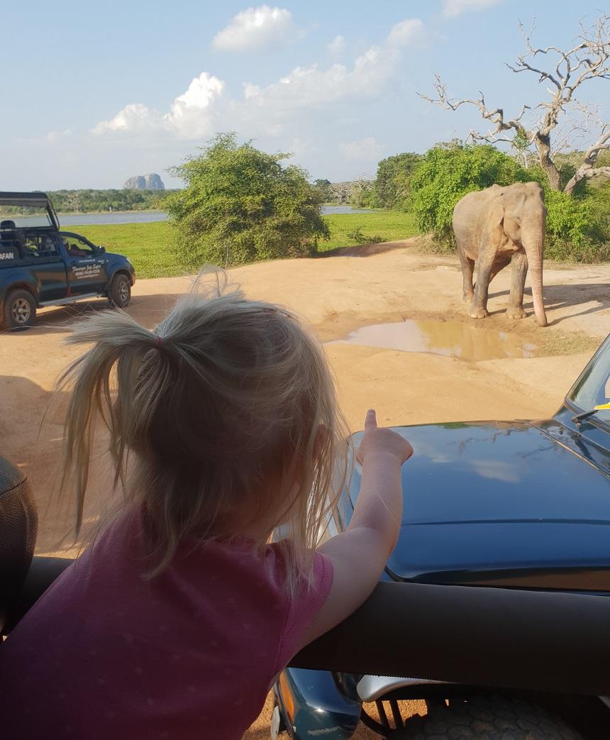 yala olifant