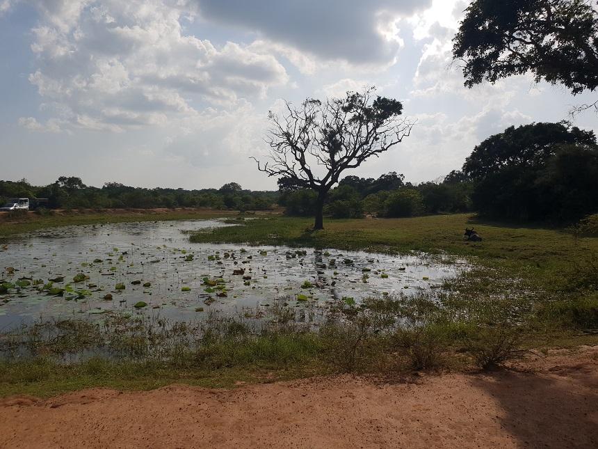 Yala is geweldig voor een safari in Sri Lanka