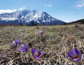 De ruige Yukon als levend decor voor onze roadtrip