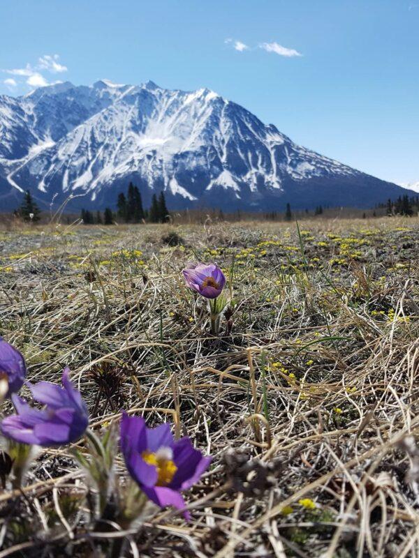 De ruige Yukon in Canada