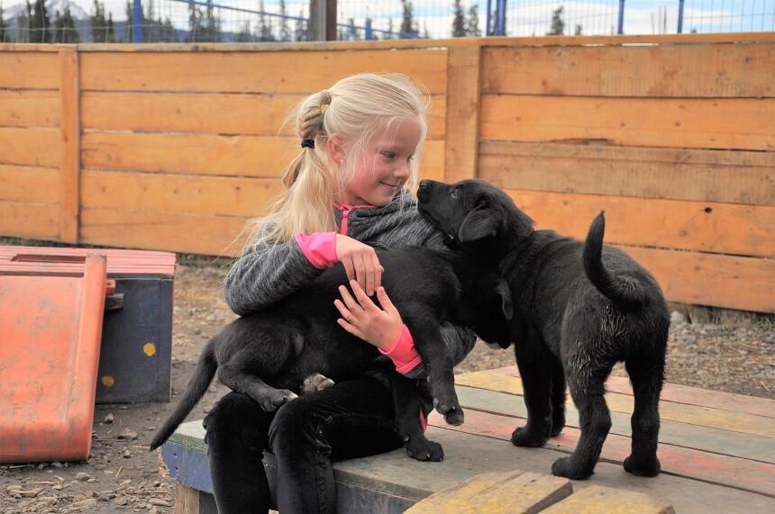 Puppy's aaien bij Caribou Crossing puppy padding