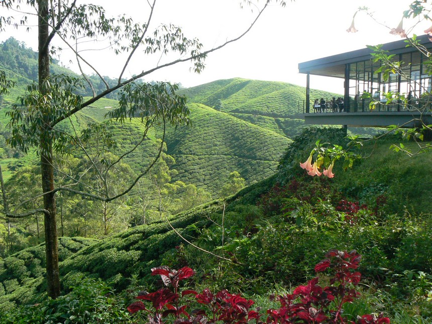 Theeplantages van Cameron Highlands