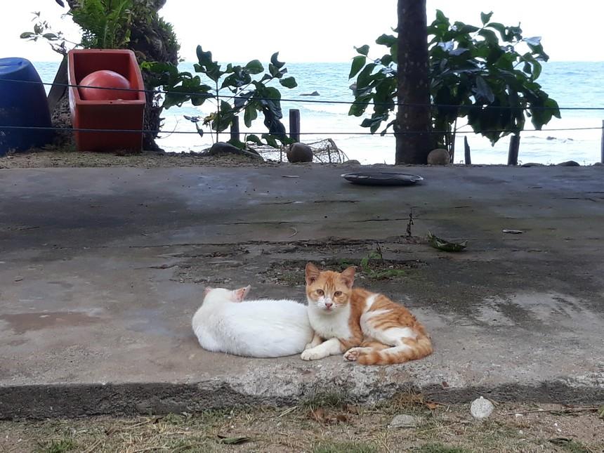Poesjes op de Tioman eilanden