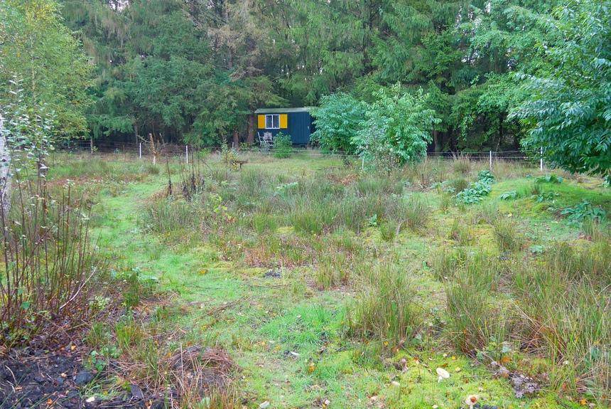 Slapen in een pipowagen, verscholen in het bos: op avontuur in eigen land