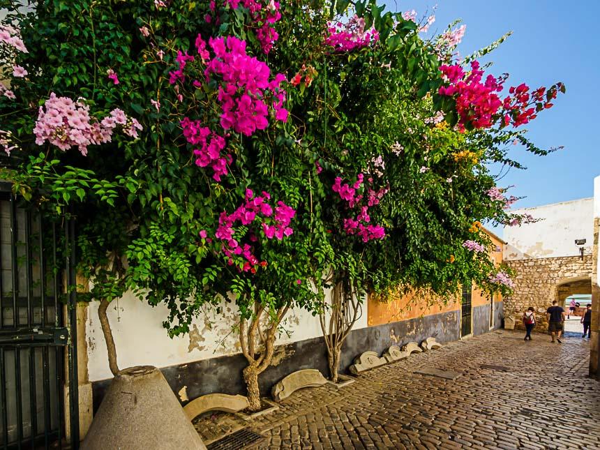 Faro - prachtig stadsgroen