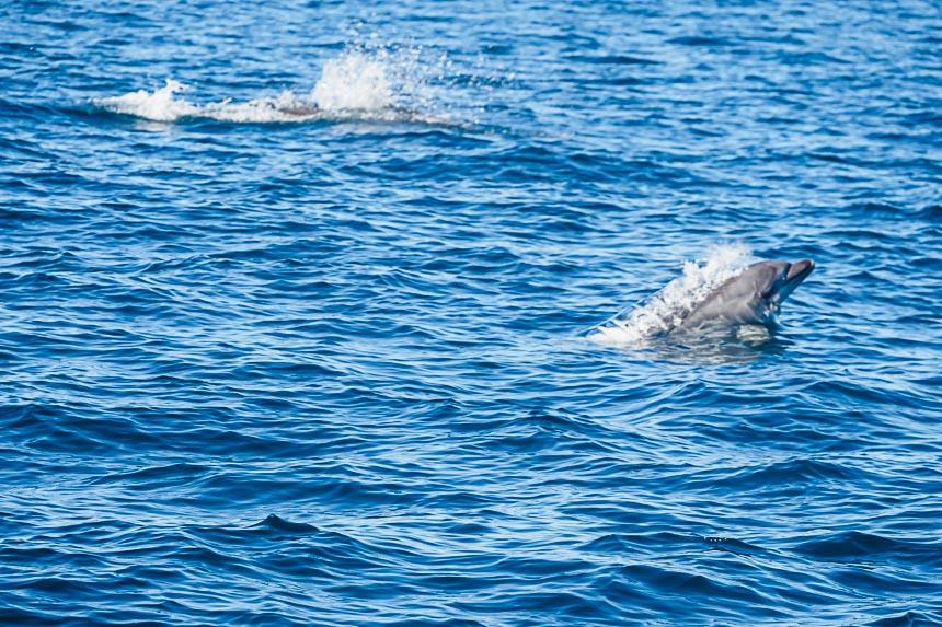 Dolfijnen langs de kust van de Algarve