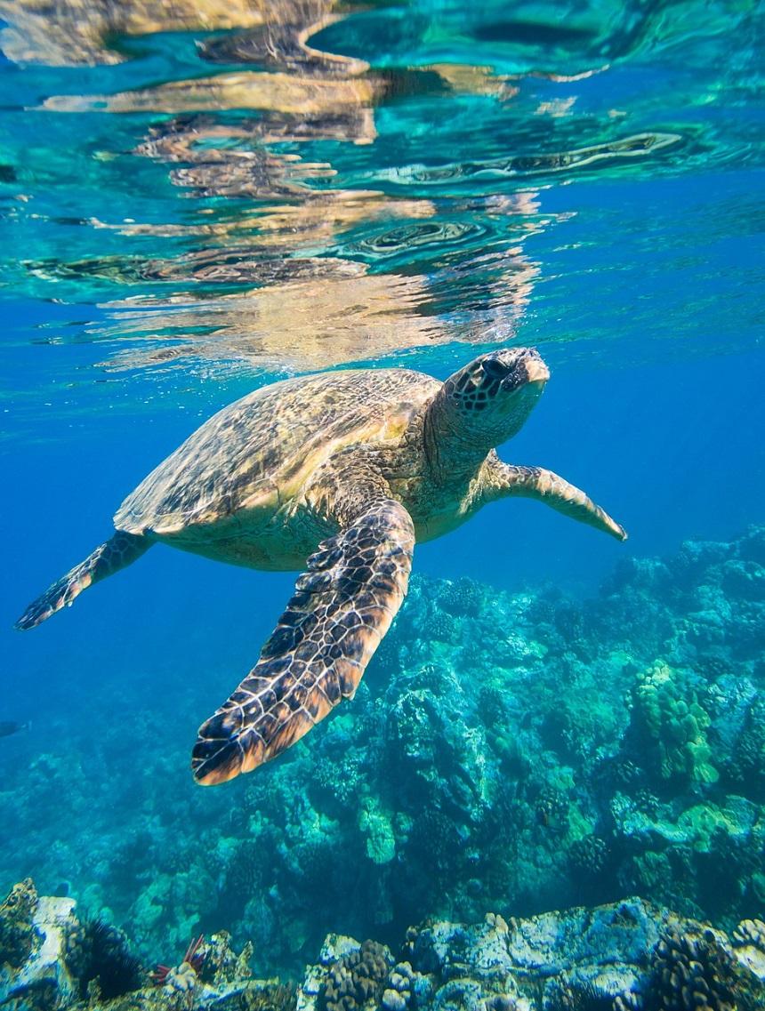 Snorkelen Tenerife
