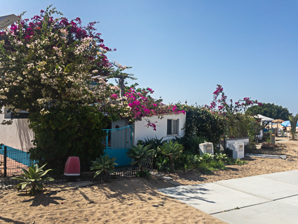 Uitbundige planten op Culatra, Ria Formoso