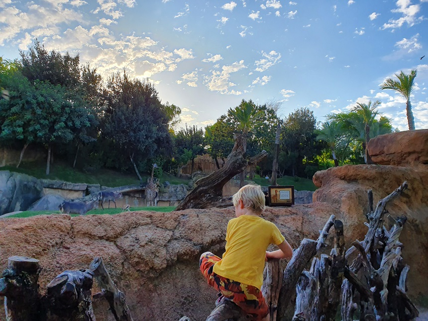 Bioparc zoo immersion
