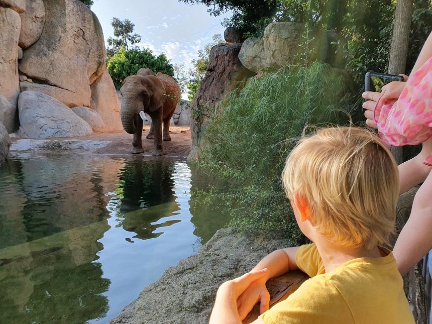 Afrikaanse olifant Bioparc